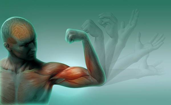 Upper Body Photograph - Male Muscles by Claus Lunau