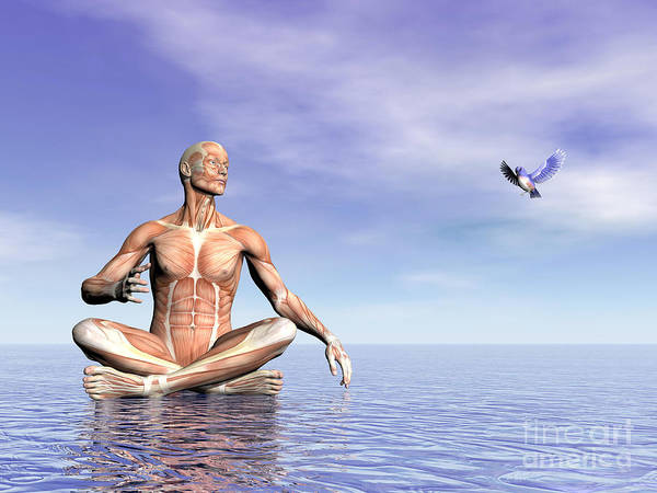 Muscle Tissue Digital Art - Male Musculature In Lotus Position by Elena Duvernay