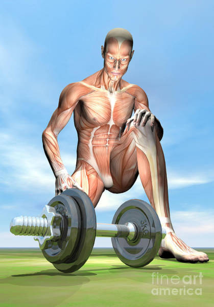 Muscle Tissue Digital Art - Male Musculature Looking At A Dumbbell by Elena Duvernay