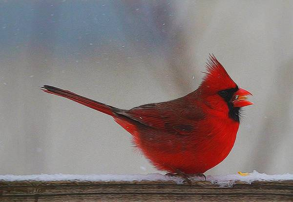 Cardinal Mixed Media - Male Northern Cardinal In Winter by Dan Sproul