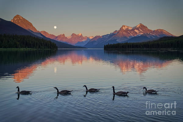 Photograph - Follow The Leader by Carrie Cole