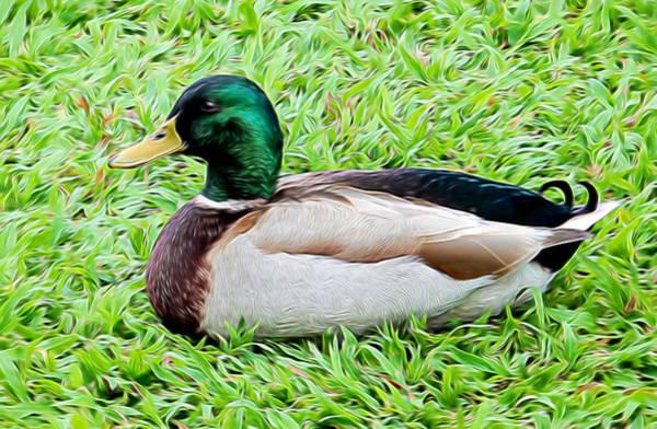 Mixed Media - Mallard Duck by Pamela Walton