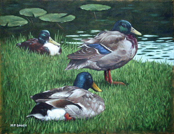 Painting - Mallards On River Bank by Martin Davey