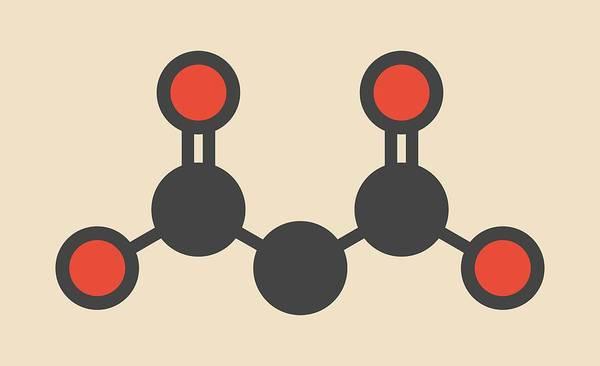 Beetroot Wall Art - Photograph - Malonic Acid Molecule by Molekuul