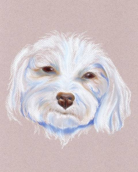 Pastel - Maltipoo With An Attitude by MM Anderson
