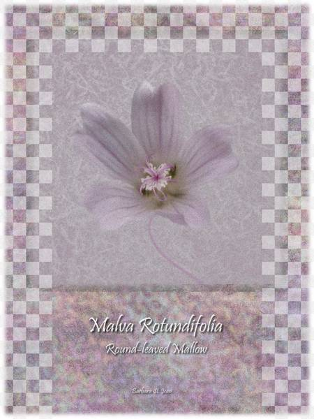 Digital Art - Malva White Wild Flower Poster 3 by Barbara St Jean