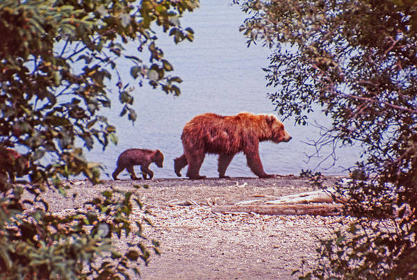 Photograph - Mama And Her Cub by Craig Ratcliffe