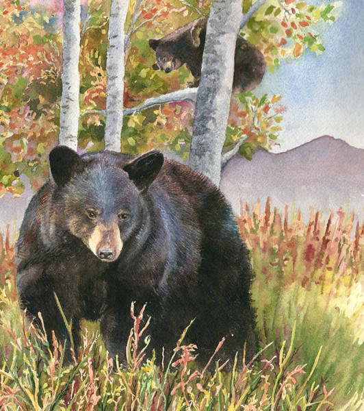 Colorado Wildlife Wall Art - Painting - Mama Bear by Anne Gifford