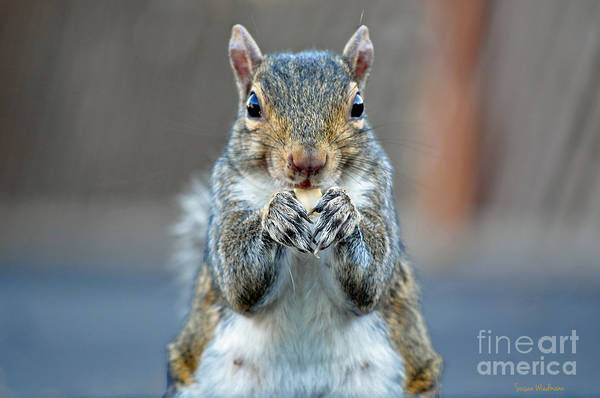 Photograph - Mama Showing Off Her Manicure by Susan Wiedmann