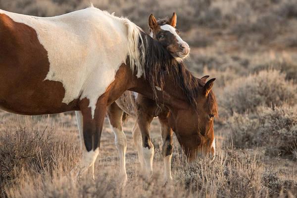 Foal Photograph - Mama's Boy by Sandy Sisti