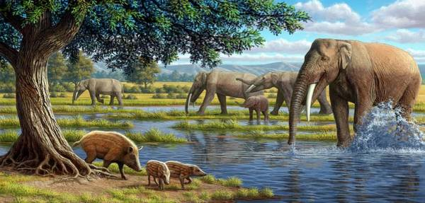 Wall Art - Photograph - Mammals Of The Miocene Era by Mauricio Anton