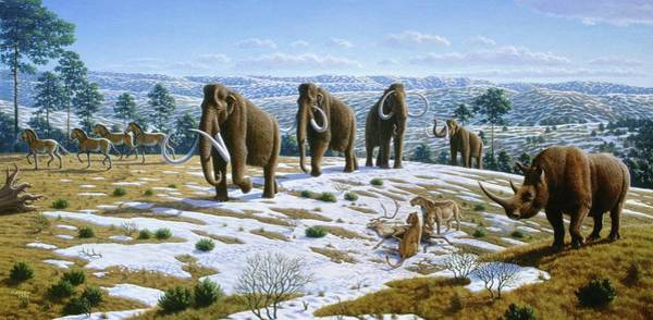 Wall Art - Photograph - Mammals Of The Pleistocene Era by Mauricio Anton