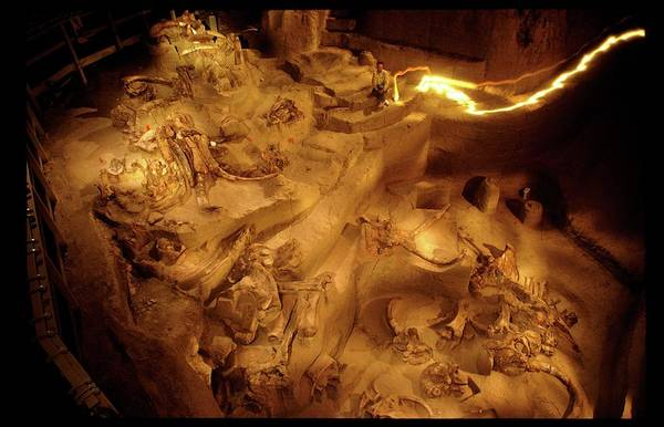 Wall Art - Photograph - Mammoth Fossil Site by Peter Menzel/science Photo Library