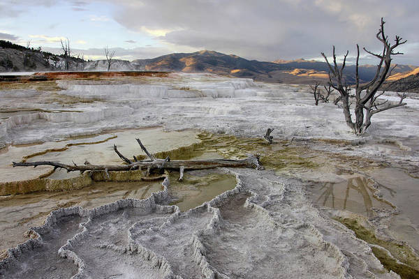 Photograph - Mammoth Hot Springs At Dusk by Theo OConnor