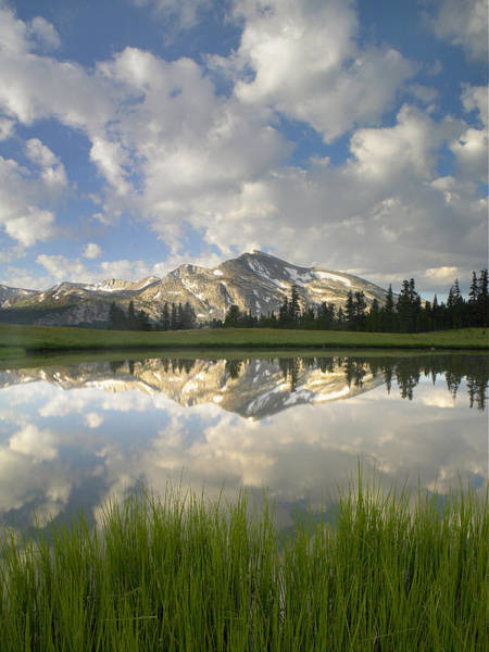 Photograph - Mammoth Peak And Clouds Reflected by Tim Fitzharris