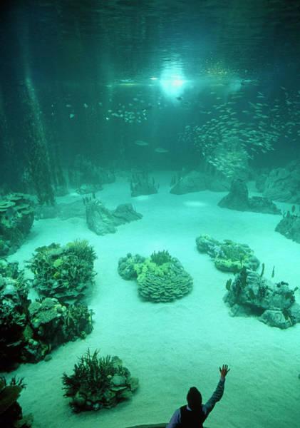 Fish Tank Photograph - Man Admires The Main Tank At The Lisbon Oceanarium by Dr Jurgen Scriba/science Photo Library