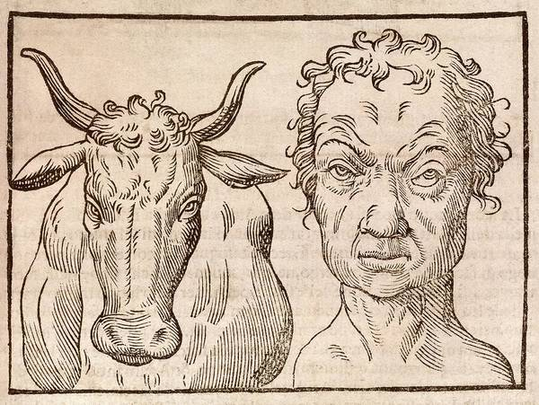 Traits Photograph - Man And Bull's Head by Middle Temple Library