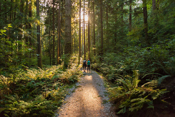 Man And Woman Hikers Admiring Sunbeams Streaming Through Trees Art Print by PamelaJoeMcFarlane