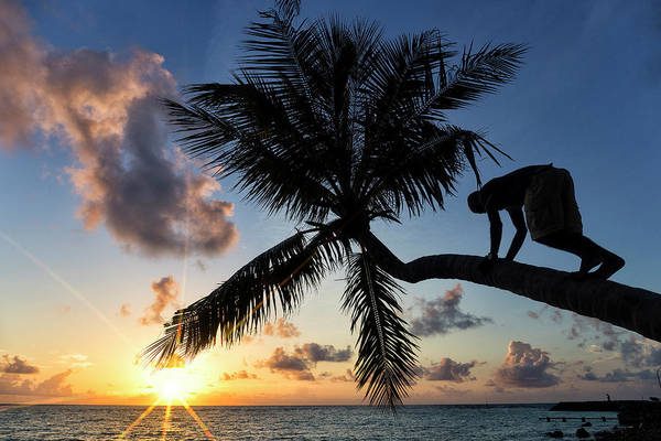 Wall Art - Photograph - Man Climbed A Palm Tree At Dawn by David Santiago Garcia