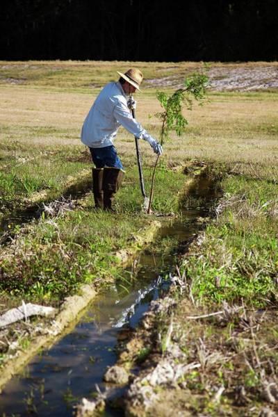 Non Profit Photograph - Man Planting A Cypress Tree by Jim West