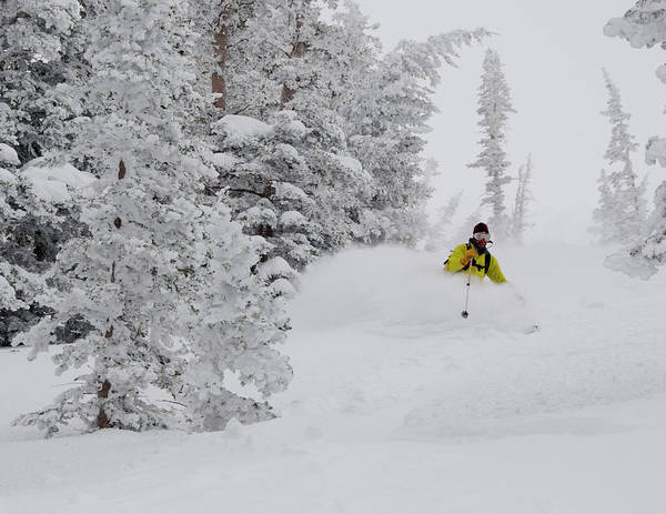 Backcountry Photograph - Man Skiing Through Rimed Aspen by Howie Garber