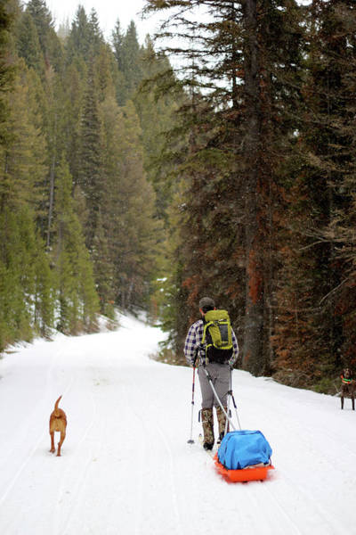 Wall Art - Photograph - Man Skis With His Dog In The Winter by Hannah Dewey