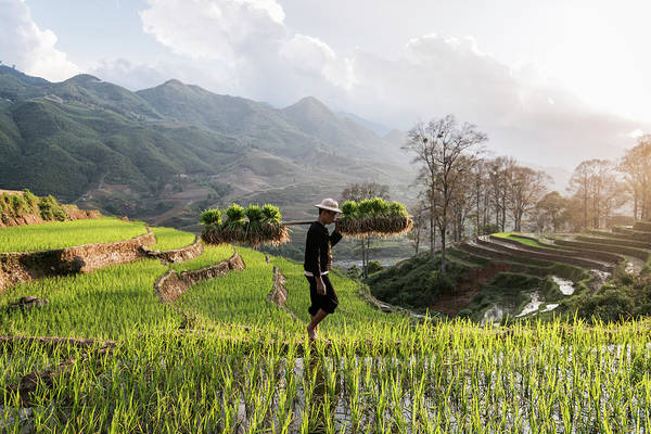 Shoulder Photograph - Man Walking Through Rice Fields by Martin Puddy