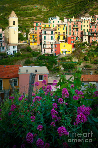 Photograph - Manarola Flowers And Houses by Inge Johnsson