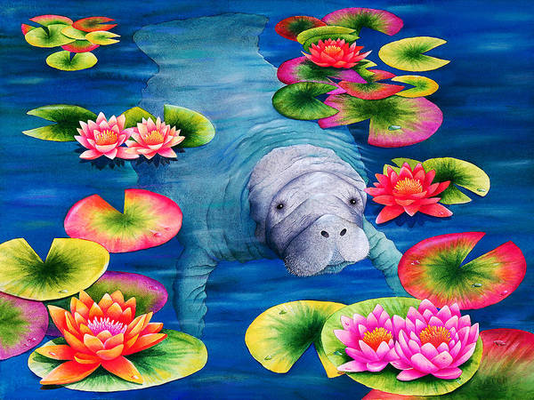 Manatee Photograph - Manatees High Tea by MGL Meiklejohn Graphics Licensing