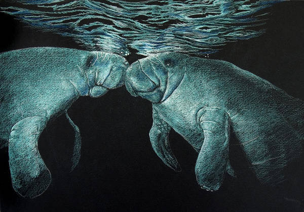Drawing - Manatees by William Underwood