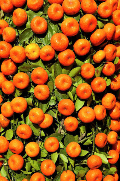 Chinese New Year Photograph - Mandarin Tree For Sale At Chinese New by Richard I'anson