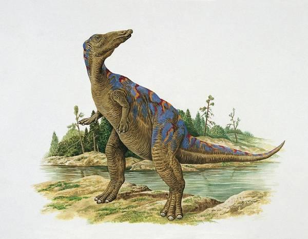Cretaceous Wall Art - Photograph - Mandschurosaurus by Deagostini/uig/science Photo Library