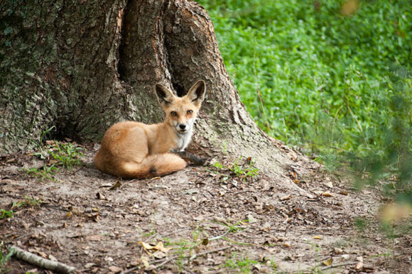 Photograph - Maned Wolf by Keith Swango
