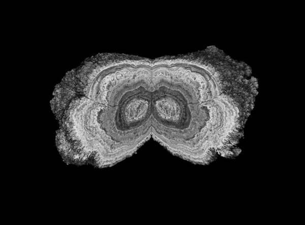 Cts Photograph - Manganese Nodule by Natural History Museum, London
