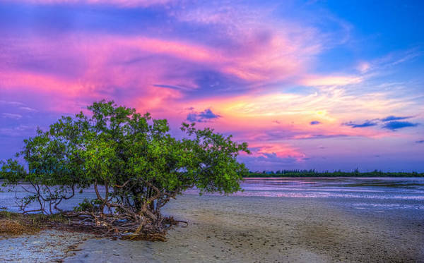 Low Tides Photograph - Mangrove By The Bay by Marvin Spates