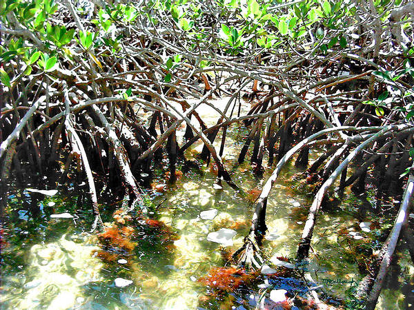 Photograph - Mangrove Roots Filtered by Duane McCullough