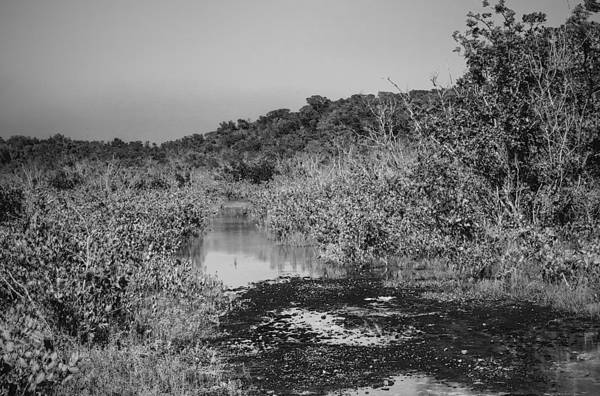 Wall Art - Photograph - Mangroves by William Wetmore