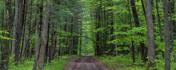 Manistee Photograph - Manistee National Forest Michigan by Steve Gadomski