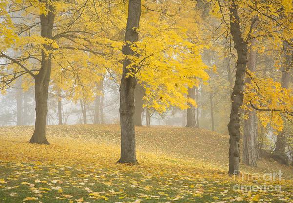 Manito Park Spokane Photograph - Manito Mists by Idaho Scenic Images Linda Lantzy