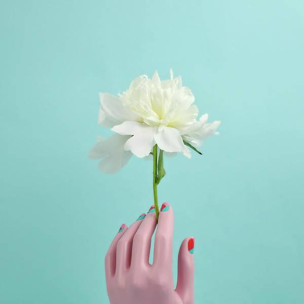 Nail Polish Wall Art - Photograph - Mannequin Hand Holding White Peony by Juj Winn