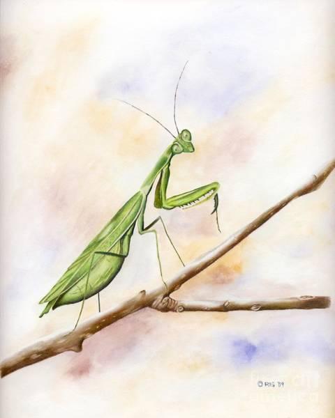 Drawing - Mantis by Rosellen Westerhoff