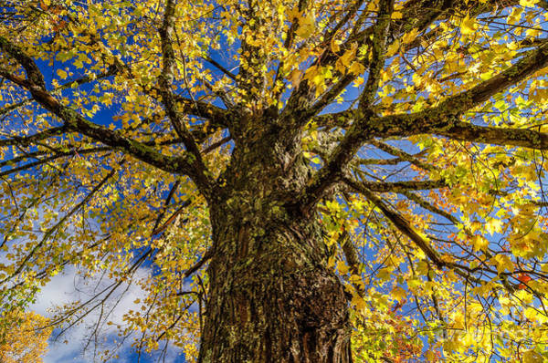 Wall Art - Photograph - Maple by Anthony Heflin