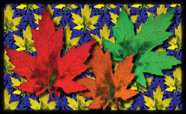Photograph - Maple Leaf Repeat  by Mauro Celotti
