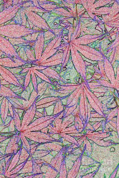 Photograph - Maple Leaves No.3 by Tony Mills