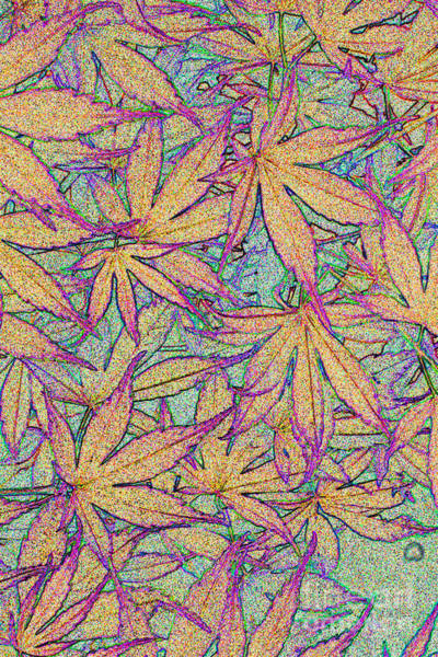 Photograph - Maple Leaves No.4 by Tony Mills