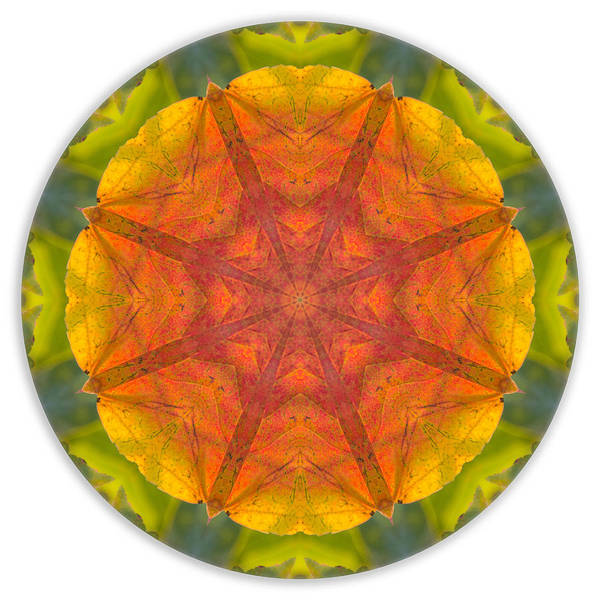 Photograph - Maple Mandala 2 by Beth Sawickie