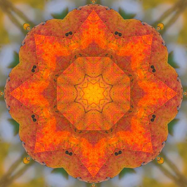 Photograph - Maple Mandala by Beth Sawickie