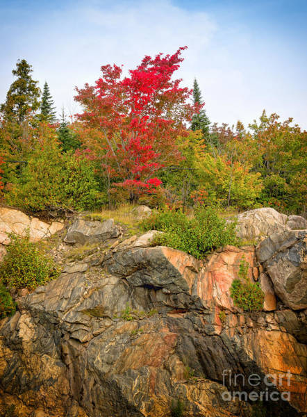 Photograph - Maple On The Rocks by Les Palenik