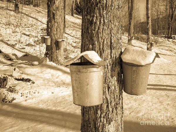 Photograph - Maple Sap Buckets by Edward Fielding