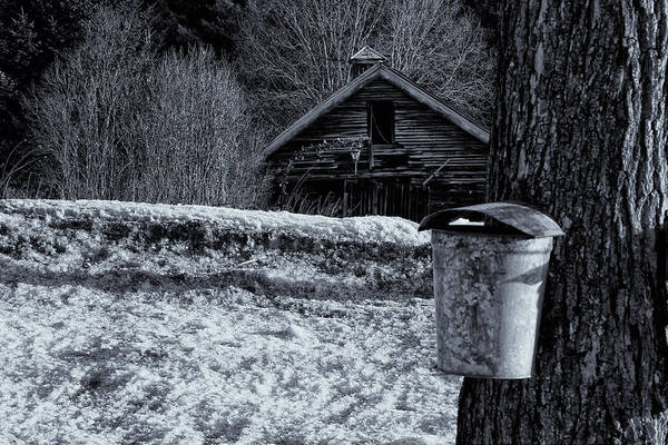 Photograph - Maple Syrup Bucket by Tom Singleton